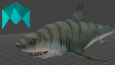 Shark Animations